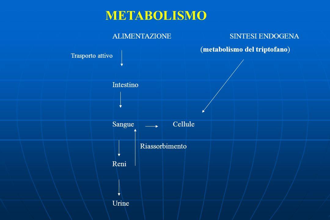 METABOLISMO ALIMENTAZIONE SINTESI ENDOGENA (metabolismo del triptofano) Intestino Sangue Cellule Reni Urine Trasporto attivo Riassorbimento