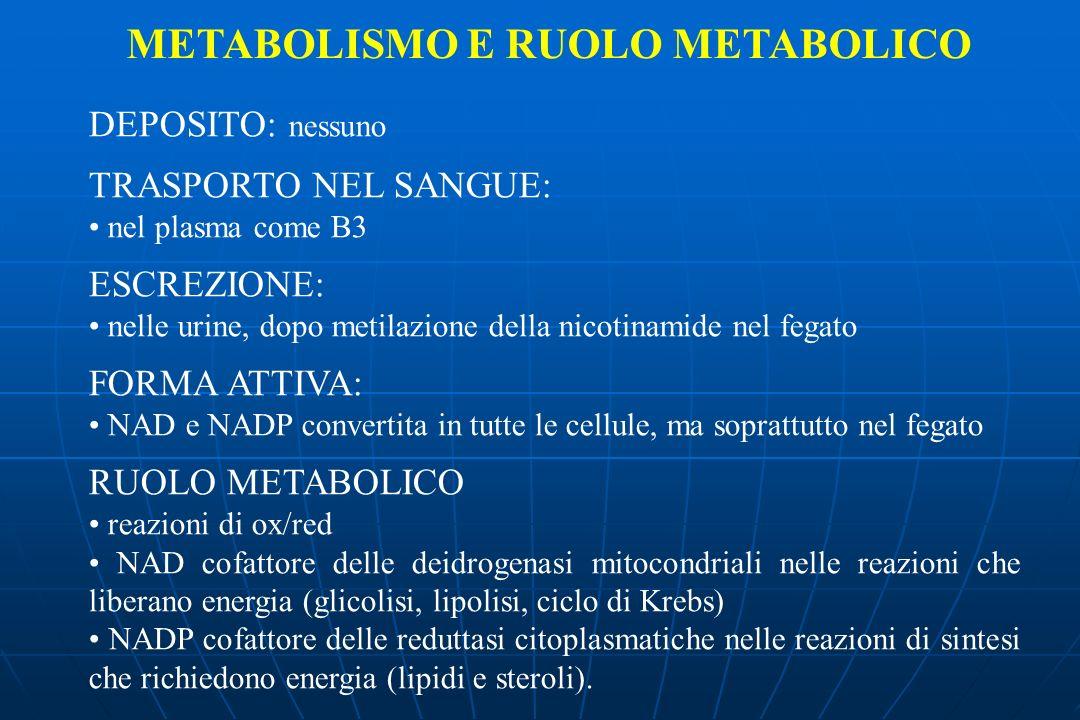 DEPOSITO: nessuno TRASPORTO NEL SANGUE: nel plasma come B3 ESCREZIONE: nelle urine, dopo metilazione della nicotinamide nel fegato FORMA ATTIVA: NAD e NADP convertita in tutte le cellule, ma soprattutto nel fegato RUOLO METABOLICO reazioni di ox/red NAD cofattore delle deidrogenasi mitocondriali nelle reazioni che liberano energia (glicolisi, lipolisi, ciclo di Krebs) NADP cofattore delle reduttasi citoplasmatiche nelle reazioni di sintesi che richiedono energia (lipidi e steroli).