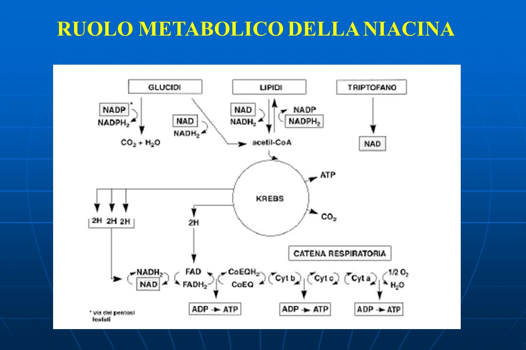 RUOLO METABOLICO DELLA NIACINA