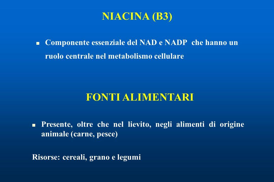 Componente essenziale del NAD e NADP che hanno un ruolo centrale nel metabolismo cellulare NIACINA (B3) Presente, oltre che nel lievito, negli alimenti di origine animale (carne, pesce) Risorse: cereali, grano e legumi FONTI ALIMENTARI