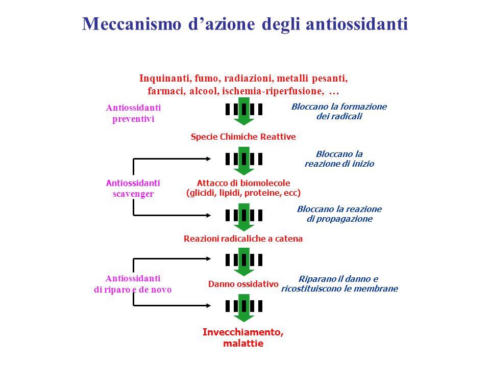 Meccanismo dazione degli antiossidanti Antiossidanti preventivi Bloccano la formazione dei radicali Antiossidanti scavenger Bloccano la reazione di in
