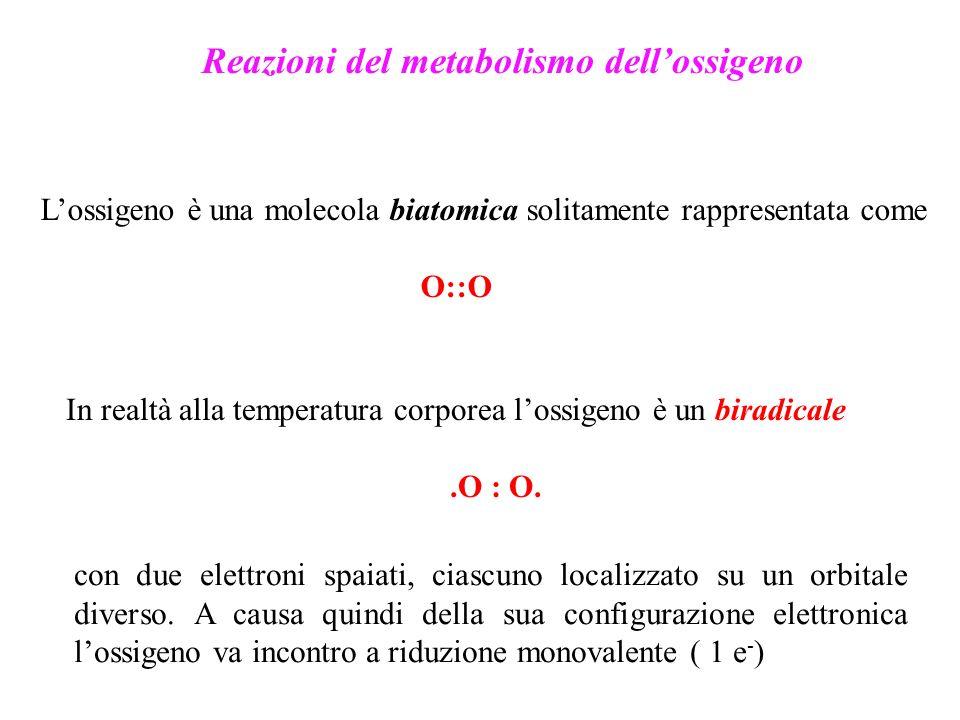Reazioni del metabolismo dellossigeno Lossigeno è una molecola biatomica solitamente rappresentata come O::O In realtà alla temperatura corporea lossi