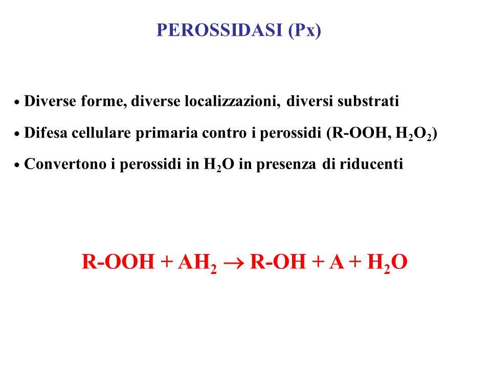 PEROSSIDASI (Px) Diverse forme, diverse localizzazioni, diversi substrati Difesa cellulare primaria contro i perossidi (R-OOH, H 2 O 2 ) Convertono i