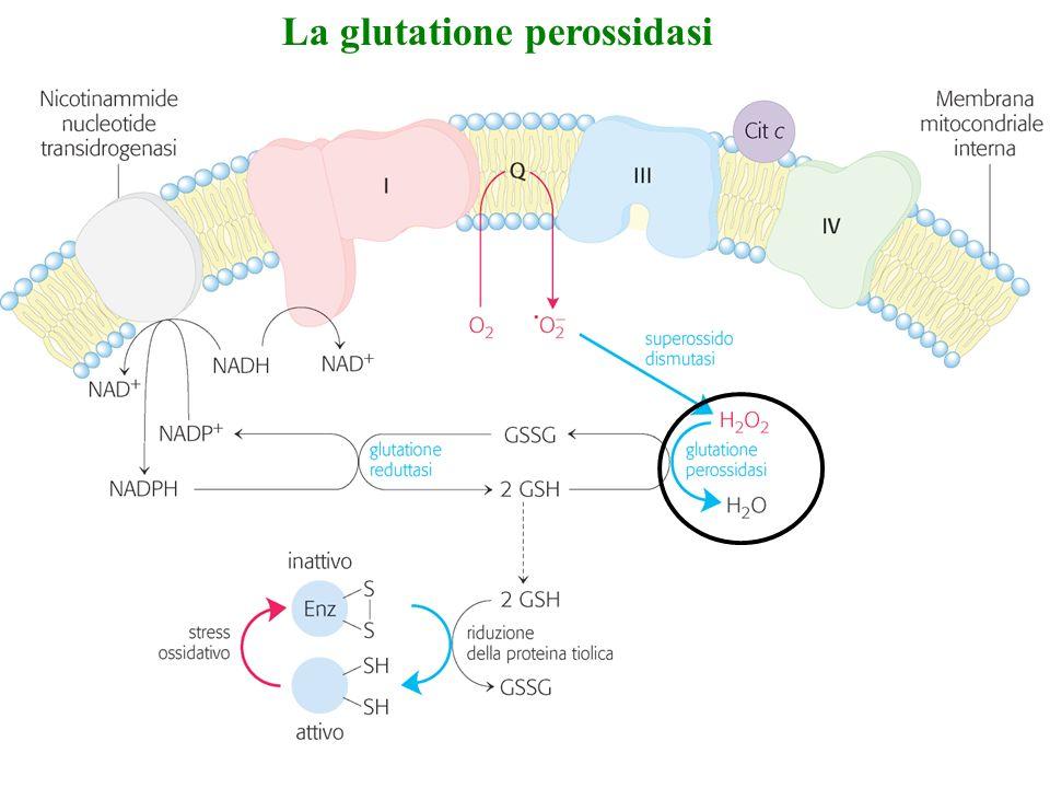 La glutatione perossidasi