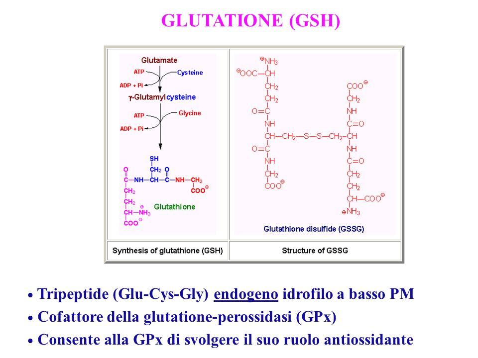 Tripeptide (Glu-Cys-Gly) endogeno idrofilo a basso PM Cofattore della glutatione-perossidasi (GPx) Consente alla GPx di svolgere il suo ruolo antiossi