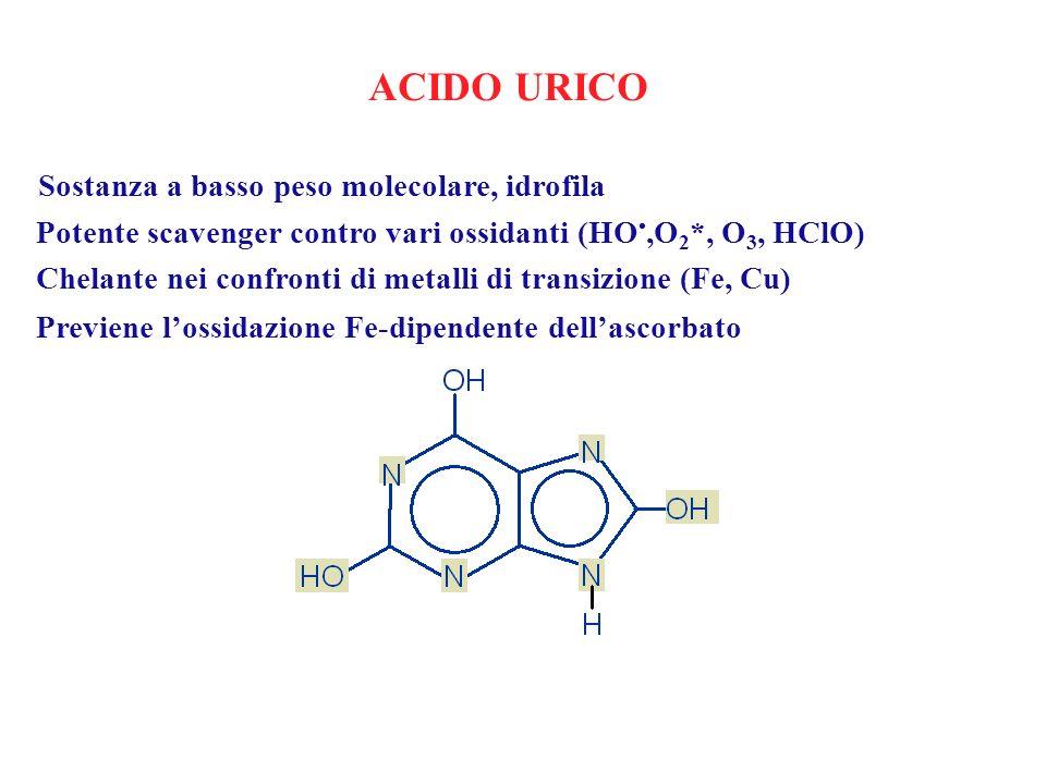 ACIDO URICO Sostanza a basso peso molecolare, idrofila Potente scavenger contro vari ossidanti (HO,O 2 *, O 3, HClO) Chelante nei confronti di metalli