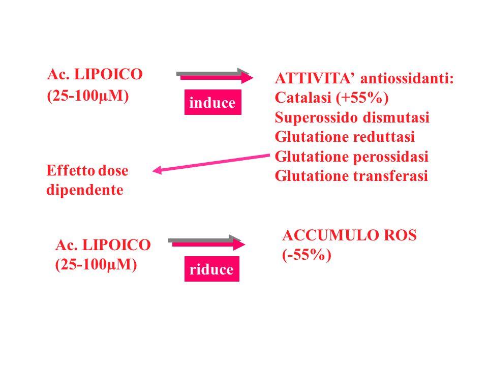 Ac. LIPOICO (25-100µM) induce ATTIVITA antiossidanti: Catalasi (+55%) Superossido dismutasi Glutatione reduttasi Glutatione perossidasi Glutatione tra