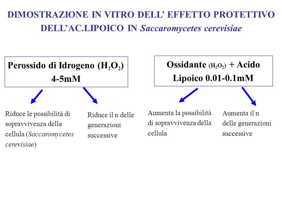 DIMOSTRAZIONE IN VITRO DELL EFFETTO PROTETTIVO DELLAC.LIPOICO IN Saccaromycetes cerevisiae Perossido di Idrogeno (H 2 O 2 ) 4-5mM Ossidante (H 2 O 2 )