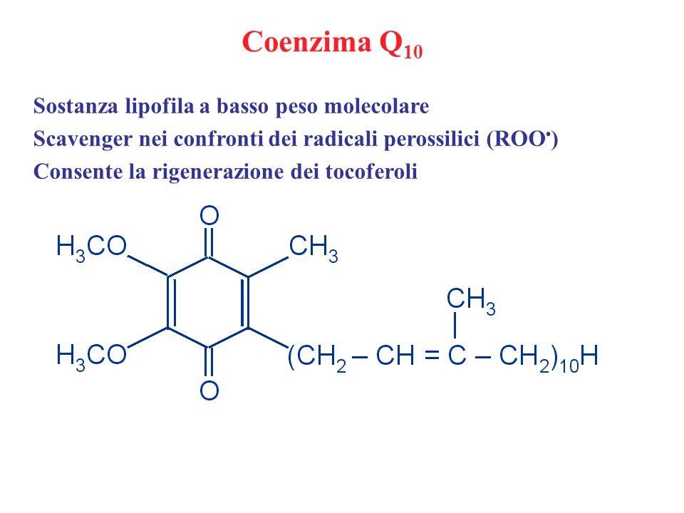 Coenzima Q 10 Sostanza lipofila a basso peso molecolare Scavenger nei confronti dei radicali perossilici (ROO ) Consente la rigenerazione dei tocofero