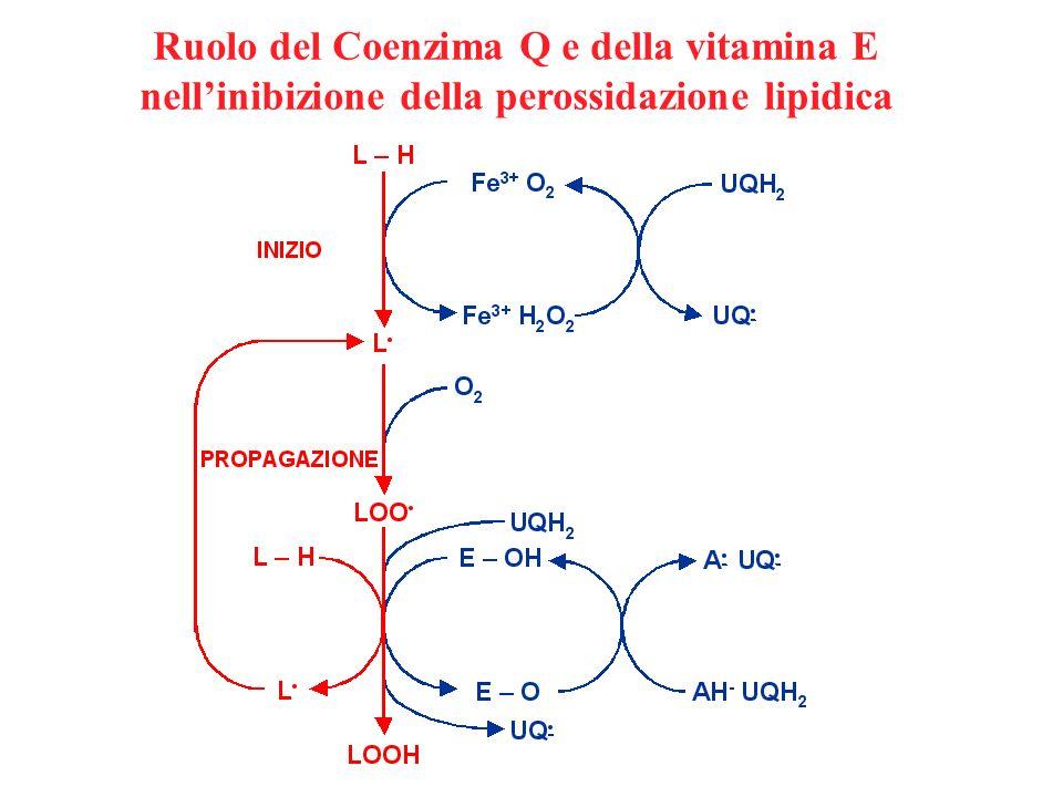 Ruolo del Coenzima Q e della vitamina E nellinibizione della perossidazione lipidica