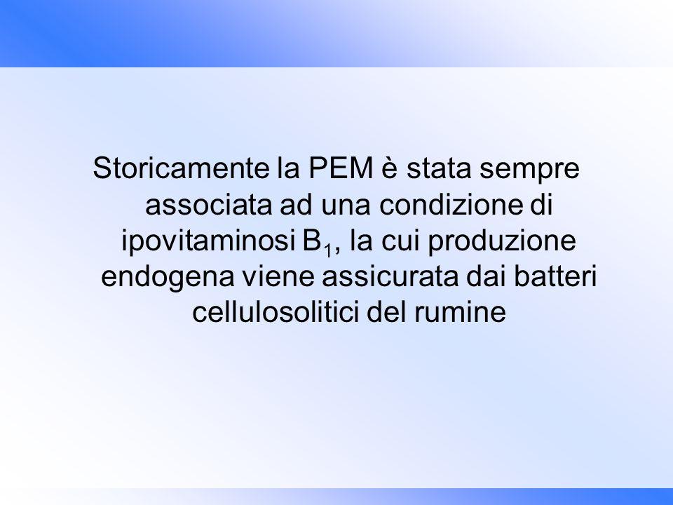 Storicamente la PEM è stata sempre associata ad una condizione di ipovitaminosi B 1, la cui produzione endogena viene assicurata dai batteri celluloso