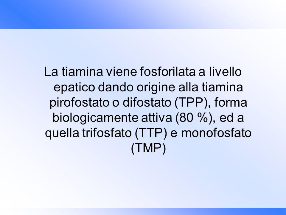 La tiamina viene fosforilata a livello epatico dando origine alla tiamina pirofostato o difostato (TPP), forma biologicamente attiva (80 %), ed a quel