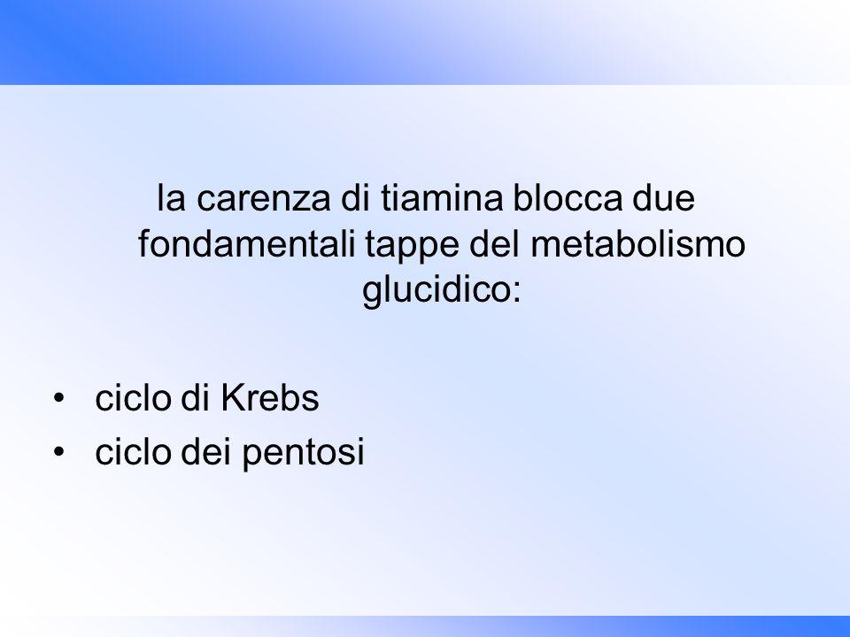 la carenza di tiamina blocca due fondamentali tappe del metabolismo glucidico: ciclo di Krebs ciclo dei pentosi