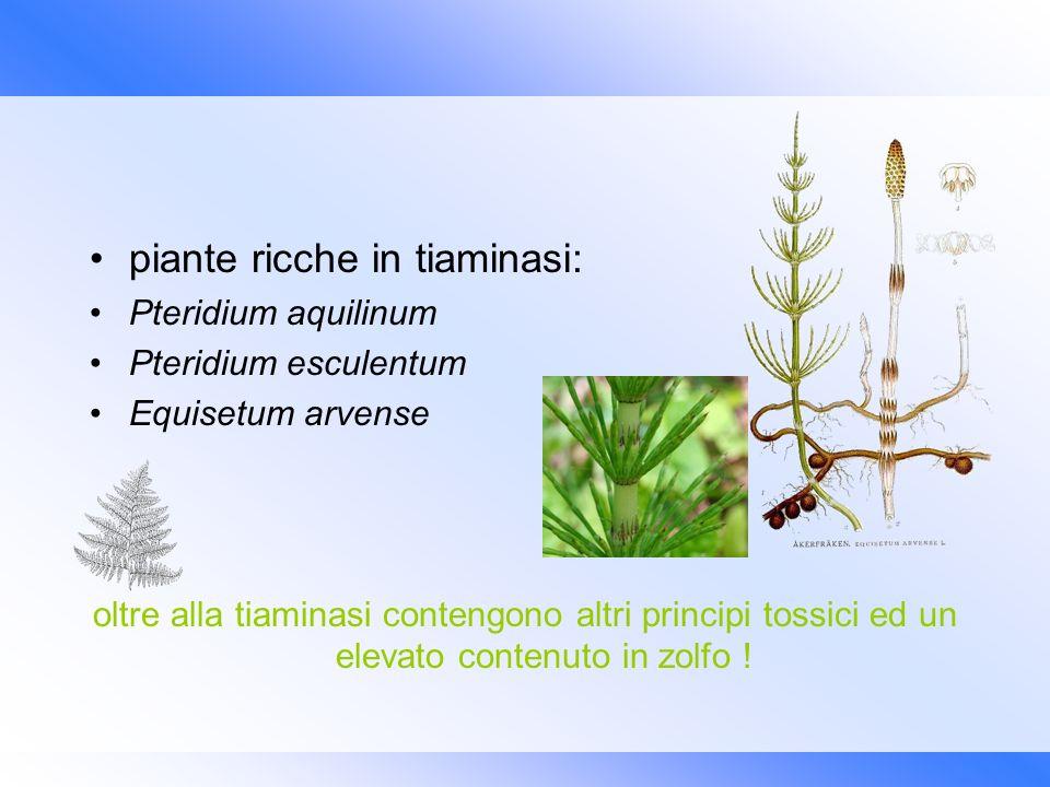 piante ricche in tiaminasi: Pteridium aquilinum Pteridium esculentum Equisetum arvense oltre alla tiaminasi contengono altri principi tossici ed un el