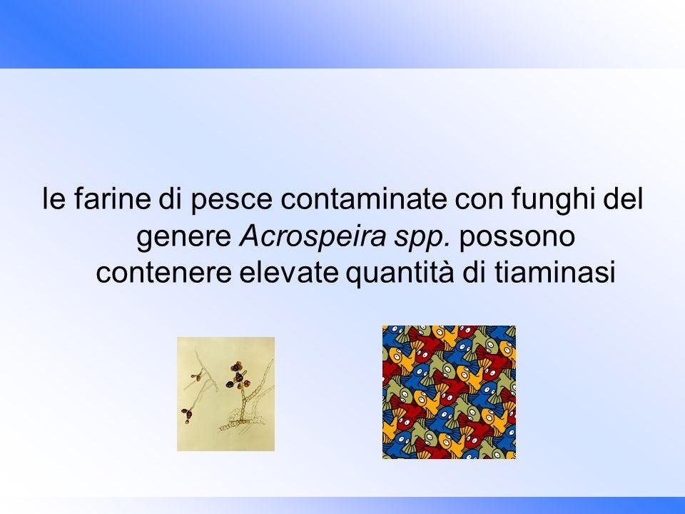 le farine di pesce contaminate con funghi del genere Acrospeira spp. possono contenere elevate quantità di tiaminasi