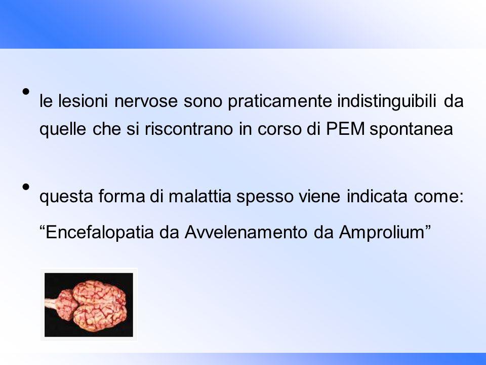 le lesioni nervose sono praticamente indistinguibili da quelle che si riscontrano in corso di PEM spontanea questa forma di malattia spesso viene indi