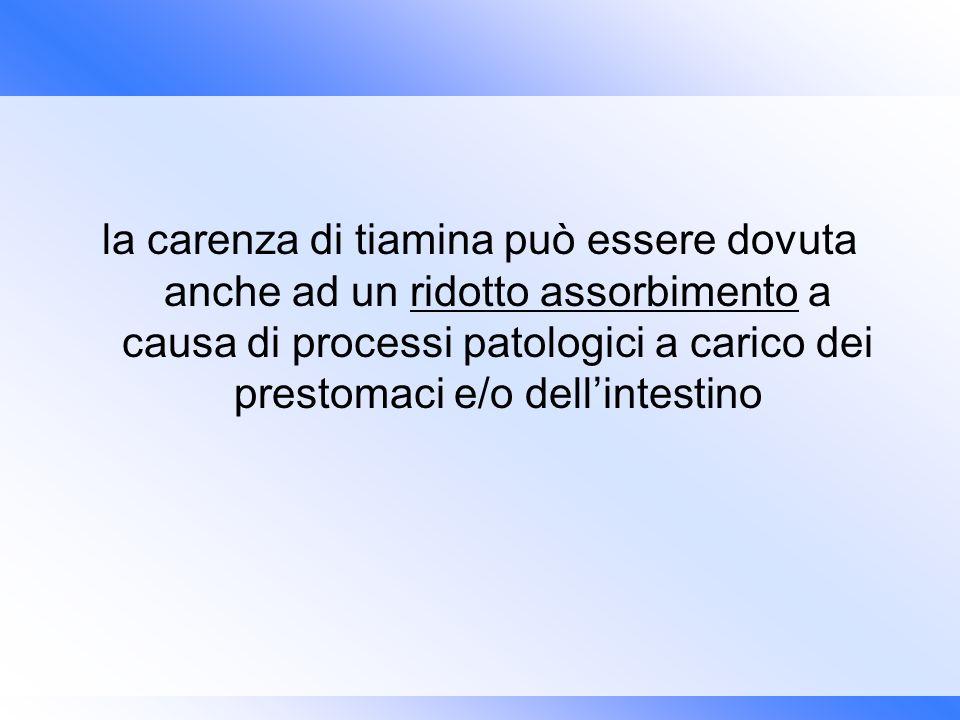 la carenza di tiamina può essere dovuta anche ad un ridotto assorbimento a causa di processi patologici a carico dei prestomaci e/o dellintestino