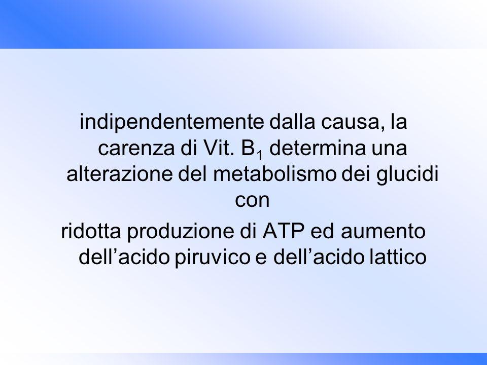 indipendentemente dalla causa, la carenza di Vit. B 1 determina una alterazione del metabolismo dei glucidi con ridotta produzione di ATP ed aumento d