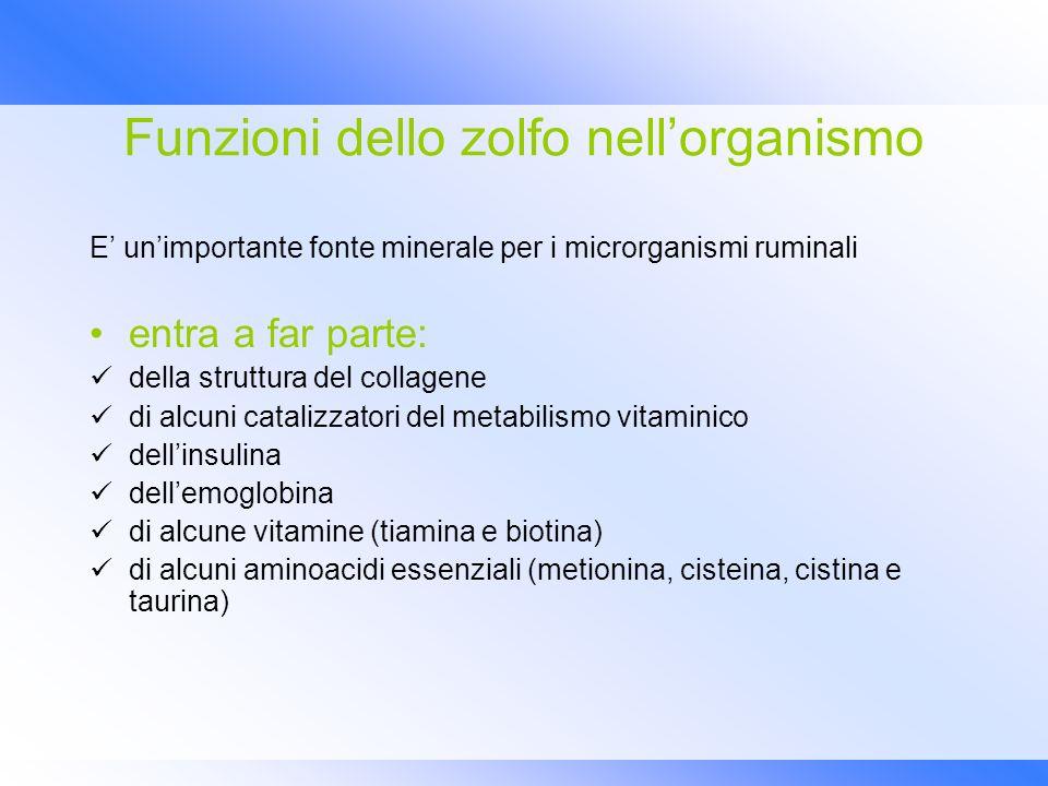 Funzioni dello zolfo nellorganismo E unimportante fonte minerale per i microrganismi ruminali entra a far parte: della struttura del collagene di alcu