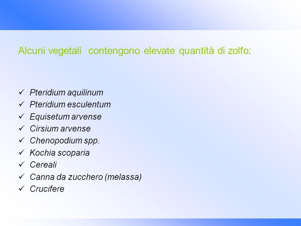 Alcuni vegetali contengono elevate quantità di zolfo: Pteridium aquilinum Pteridium esculentum Equisetum arvense Cirsium arvense Chenopodium spp. Koch
