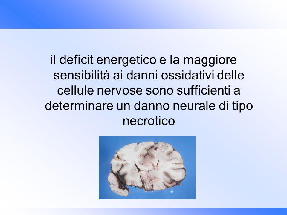 il deficit energetico e la maggiore sensibilità ai danni ossidativi delle cellule nervose sono sufficienti a determinare un danno neurale di tipo necr