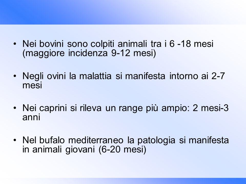Nei bovini sono colpiti animali tra i 6 -18 mesi (maggiore incidenza 9-12 mesi) Negli ovini la malattia si manifesta intorno ai 2-7 mesi Nei caprini s