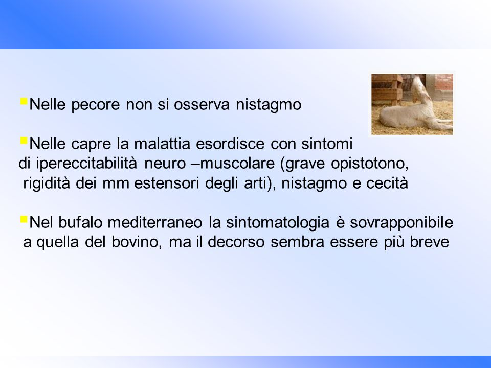 Nelle pecore non si osserva nistagmo Nelle capre la malattia esordisce con sintomi di ipereccitabilità neuro –muscolare (grave opistotono, rigidità de