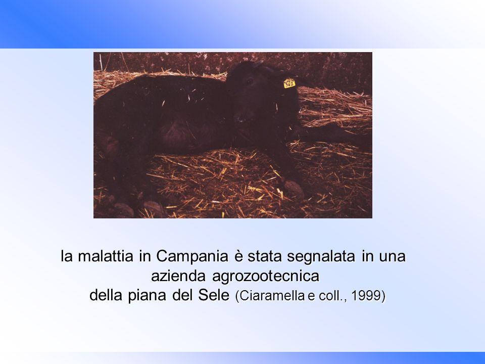 l la malattia in Campania è stata segnalata in una azienda agrozootecnica della piana del Sele (Ciaramella e coll., 1999) della piana del Sele (Ciaram