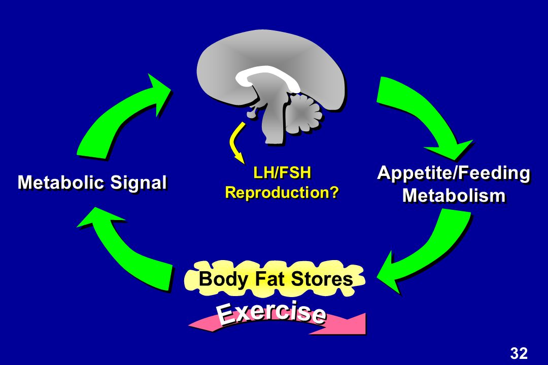 Body Fat Stores Metabolic Signal Appetite/Feeding Metabolism Appetite/Feeding Metabolism LH/FSH Reproduction.