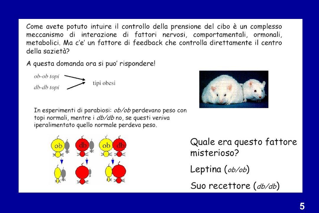 Il tessuto adiposo è il principale produttore della leptina e, quindi, laumento della massa grassa risulta nellaumento della produzione di leptina, comunicando al cervello che i depositi di grasso sono sufficienti.