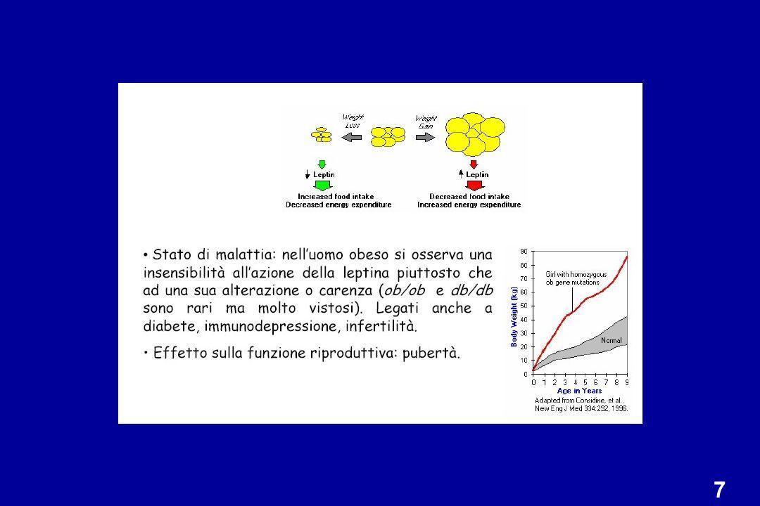 Genotipo: mutazione nel gene della leptina Fenotipo: Assenza di leptina circolante Obesità Iperfagia Infertilità La somministrazione di leptina corregge eccesso di peso, iperfagia e infertilità Topo ob/ob mouse x topo NPY ko: fenotipo intermedio MODELLI ANIMALI TOPO ob/ob