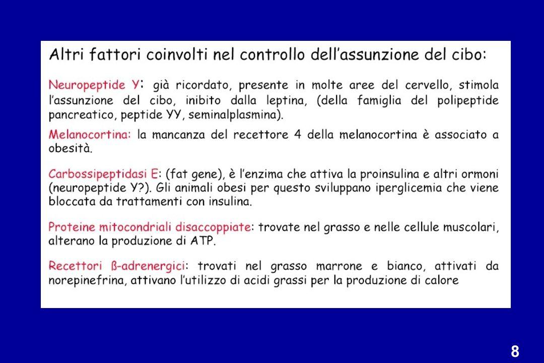 Genotipo: recettore per la leptina non funzionante Fenotipo: Obesità Diabete Iperfagia Infertilità La somministrazione di leptina NON corregge eccesso di peso, iperfagia e infertilità MODELLI ANIMALI TOPO db/db e RATTO Zucker