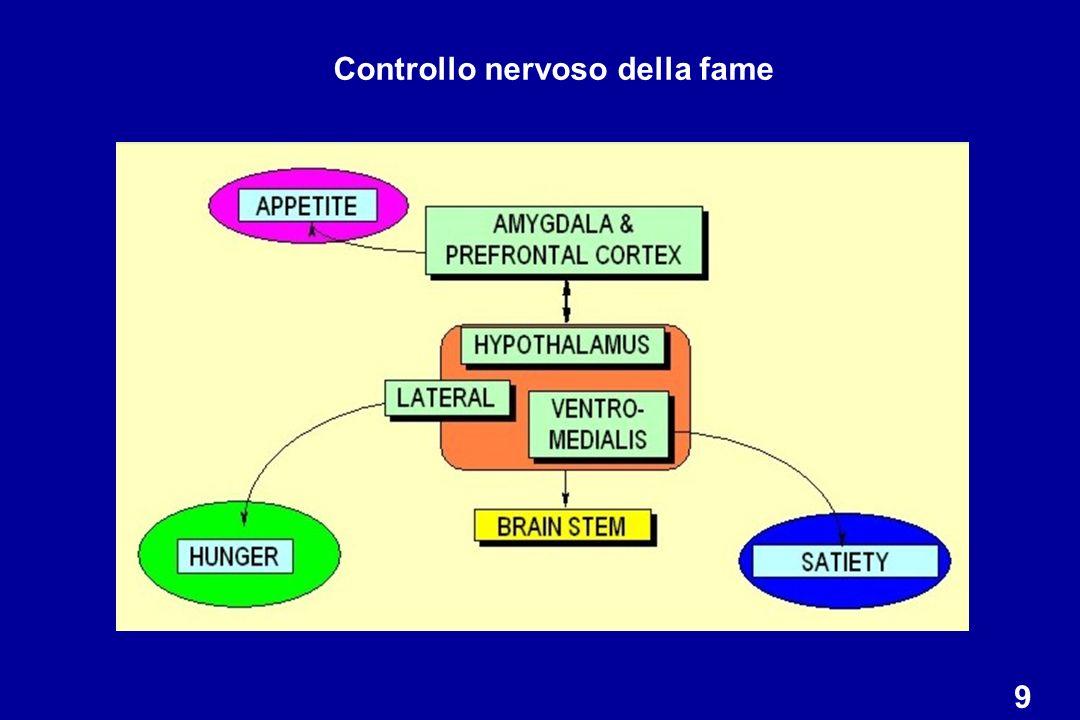 Leptina e neuropeptide Y (NPY): azioni sul bilancio energetico ipotalamo NPY Leptina metabolismo Appetito (bilancio energetico negativo) Riduzione della massa adiposa Massa adiposa sopra il set point Risposta al calo ponderale