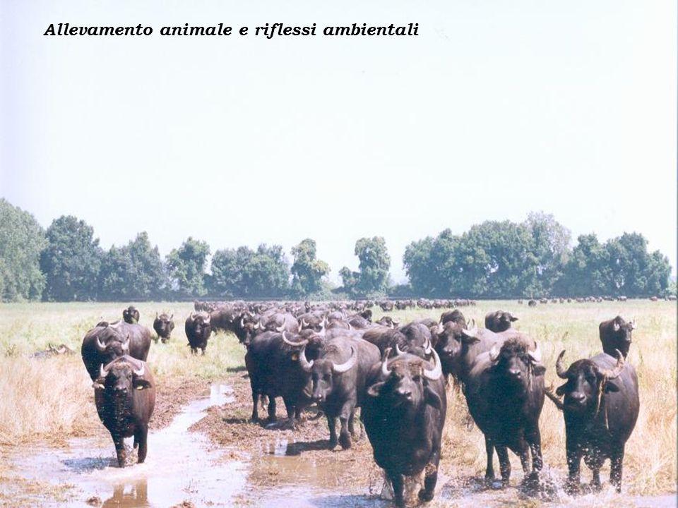Allevamento animale e riflessi ambientali