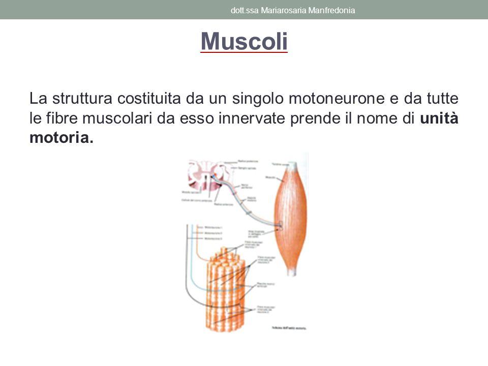 La struttura costituita da un singolo motoneurone e da tutte le fibre muscolari da esso innervate prende il nome di unità motoria. Muscoli dott.ssa Ma