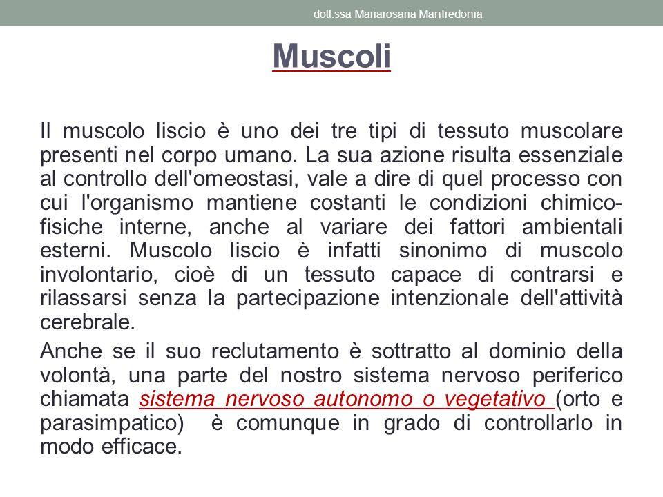 Muscoli Il muscolo liscio è uno dei tre tipi di tessuto muscolare presenti nel corpo umano. La sua azione risulta essenziale al controllo dell'omeosta