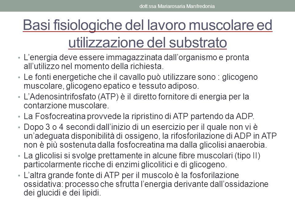 Basi fisiologiche del lavoro muscolare ed utilizzazione del substrato Lenergia deve essere immagazzinata dallorganismo e pronta allutilizzo nel moment