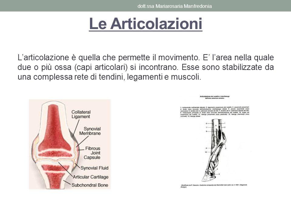 Le Articolazioni Larticolazione è quella che permette il movimento. E larea nella quale due o più ossa (capi articolari) si incontrano. Esse sono stab