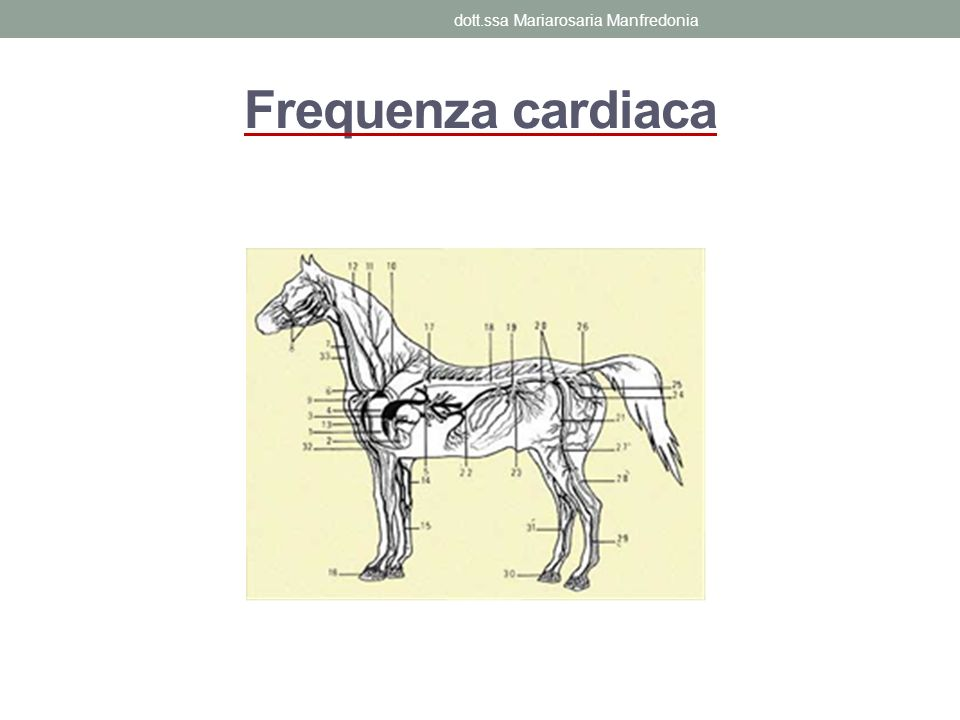 Frequenza cardiaca dott.ssa Mariarosaria Manfredonia