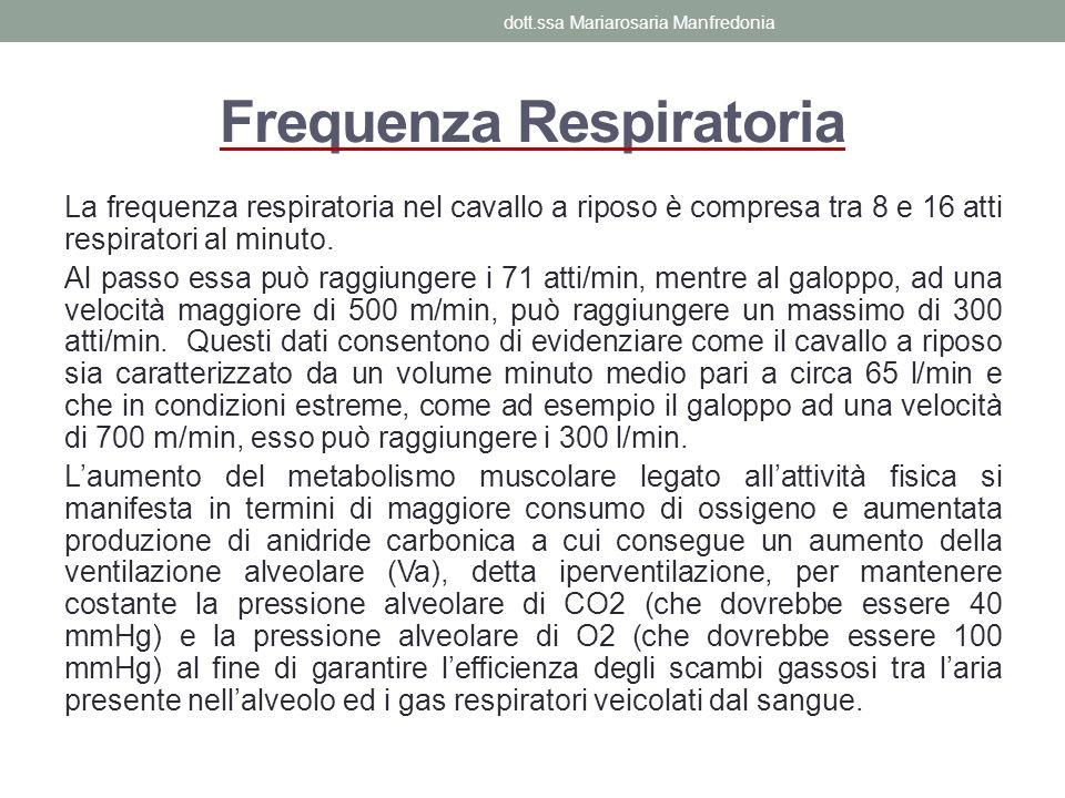 Frequenza Respiratoria La frequenza respiratoria nel cavallo a riposo è compresa tra 8 e 16 atti respiratori al minuto. Al passo essa può raggiungere