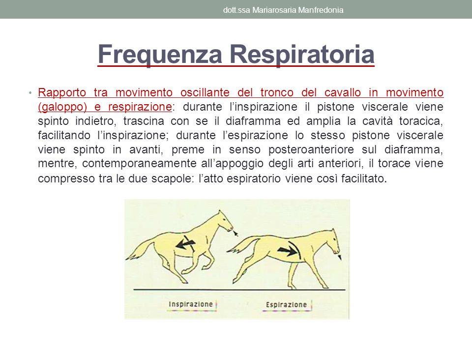 Frequenza Respiratoria Rapporto tra movimento oscillante del tronco del cavallo in movimento (galoppo) e respirazione: durante linspirazione il piston