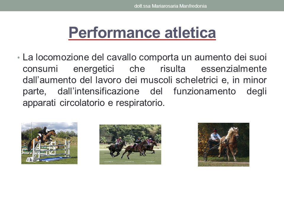 Performance atletica La locomozione del cavallo comporta un aumento dei suoi consumi energetici che risulta essenzialmente dallaumento del lavoro dei