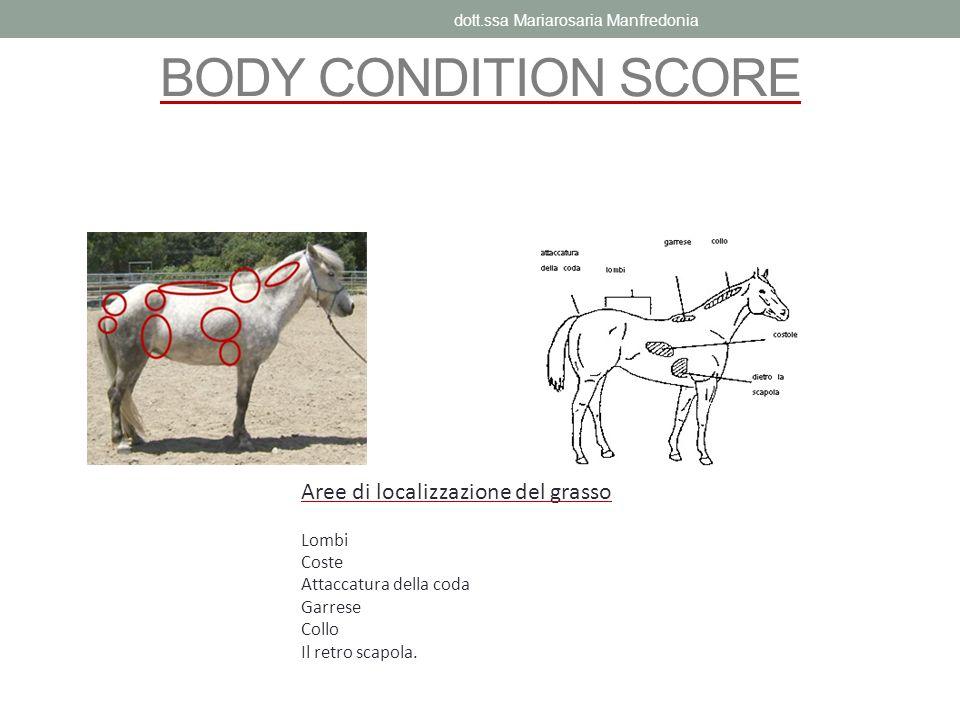 BODY CONDITION SCORE Aree di localizzazione del grasso Lombi Coste Attaccatura della coda Garrese Collo Il retro scapola. dott.ssa Mariarosaria Manfre