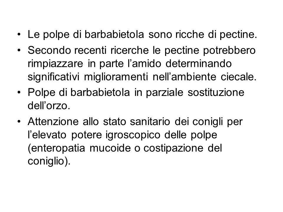 Le polpe di barbabietola sono ricche di pectine. Secondo recenti ricerche le pectine potrebbero rimpiazzare in parte lamido determinando significativi
