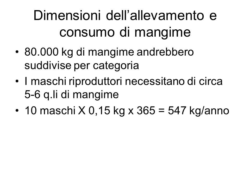 Dimensioni dellallevamento e consumo di mangime 80.000 kg di mangime andrebbero suddivise per categoria I maschi riproduttori necessitano di circa 5-6