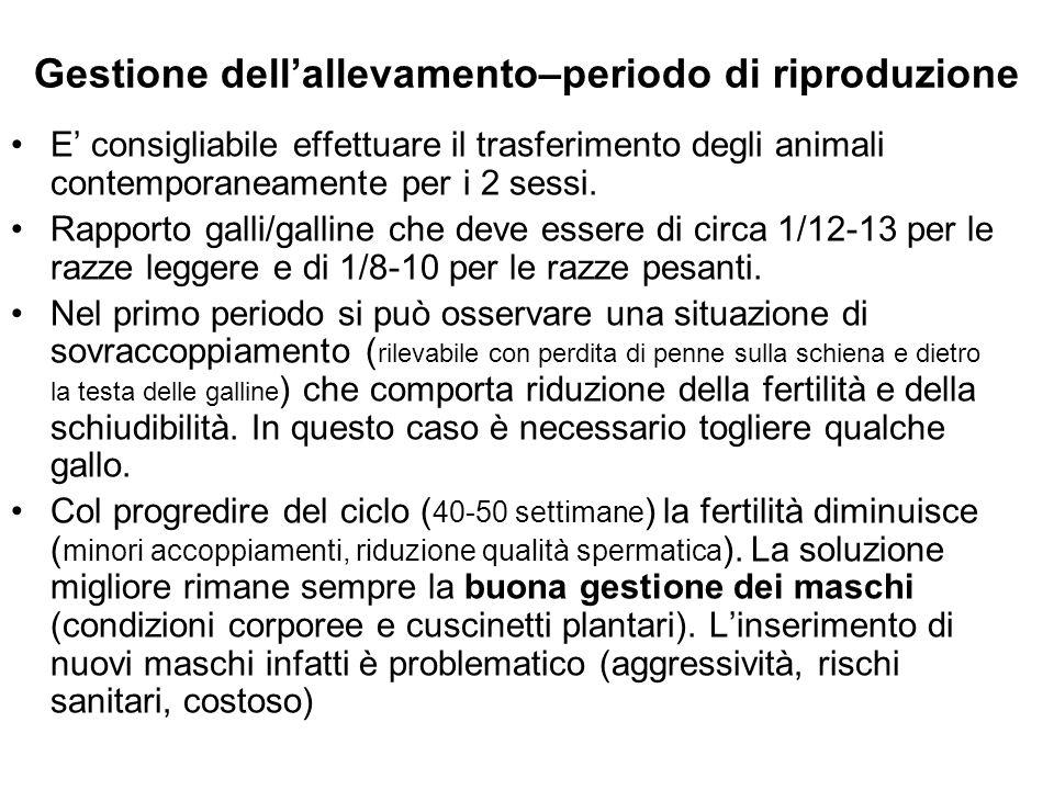 Gestione dellallevamento–periodo di riproduzione E consigliabile effettuare il trasferimento degli animali contemporaneamente per i 2 sessi. Rapporto