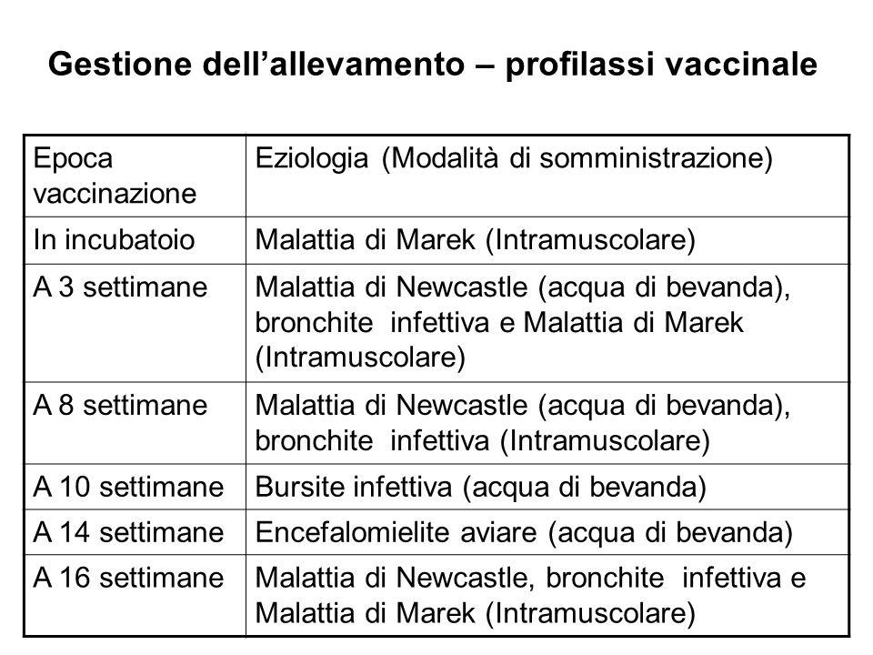 Gestione dellallevamento – profilassi vaccinale Epoca vaccinazione Eziologia (Modalità di somministrazione) In incubatoioMalattia di Marek (Intramusco