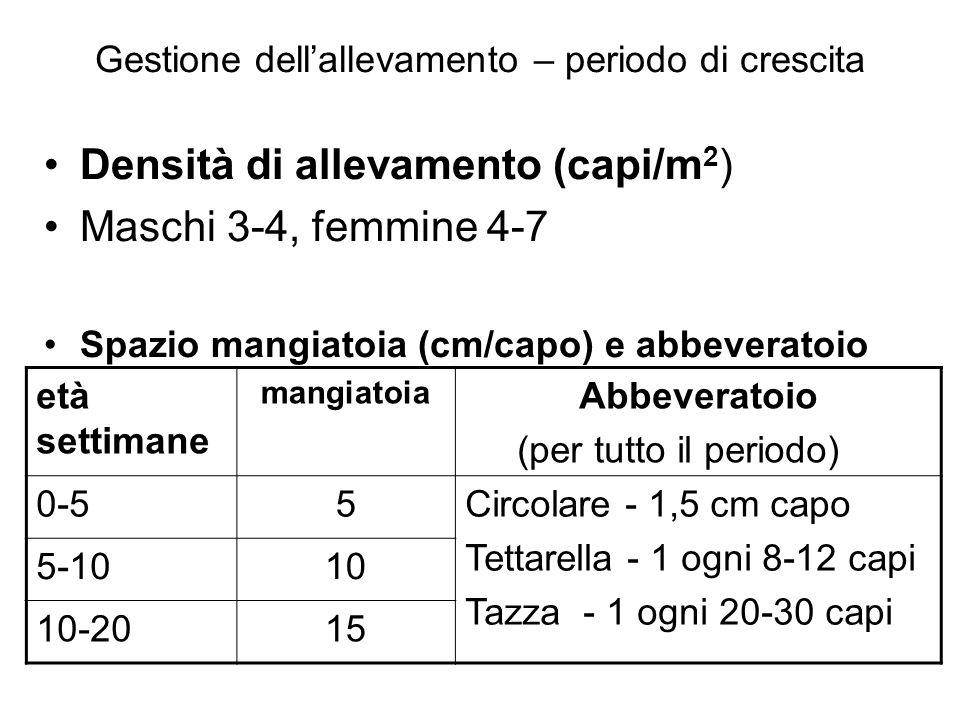 Gestione dellallevamento – periodo di crescita Densità di allevamento (capi/m 2 ) Maschi 3-4, femmine 4-7 Spazio mangiatoia (cm/capo) e abbeveratoio e