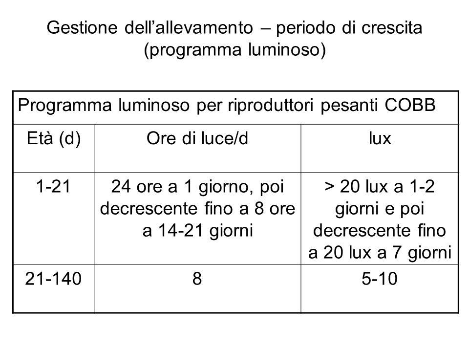 Gestione dellallevamento – periodo di crescita (programma luminoso) Programma luminoso per riproduttori pesanti COBB Età (d)Ore di luce/dlux 1-2124 or