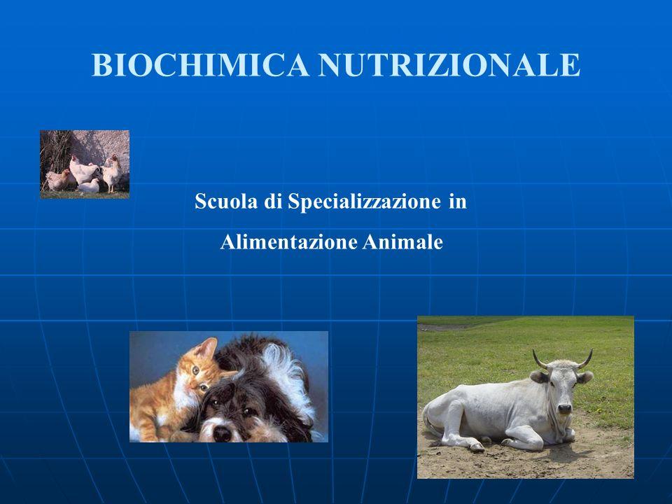 Scuola di Specializzazione in Alimentazione Animale BIOCHIMICA NUTRIZIONALE